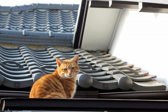 和瓦屋根の点検方法