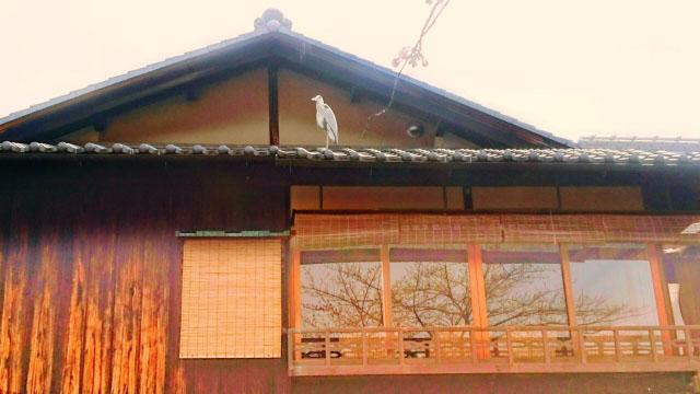 鳥から受ける屋根の被害