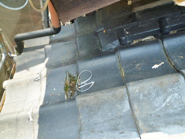 塗装すべき屋根 鳥のフン 糞害