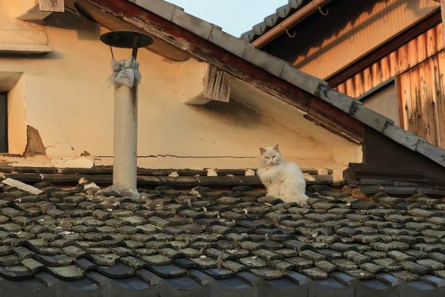 屋根は汚れやすい!